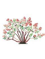 Обрезка спиреи весеннего срока цветения