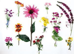 Семена: свои или покупные?