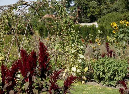 Vegetable and ornamental plants in the garden