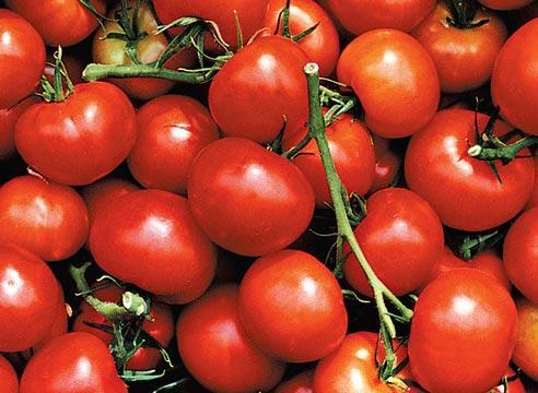 гибриды томатов для теплиц устойчивые к болезням