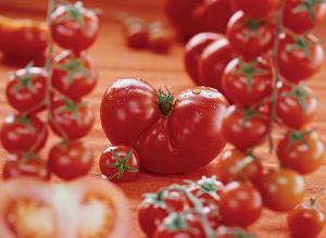 как правильно посадить пророщенные семена помидор