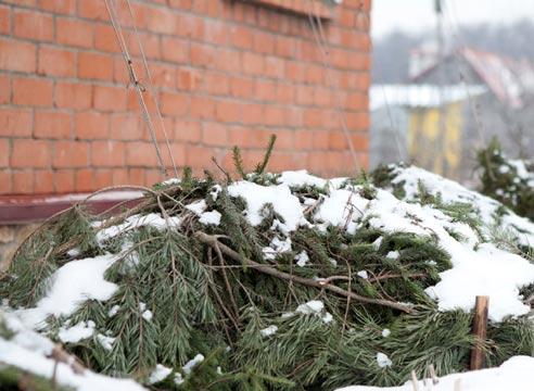цветник сезонные работы в декабре, что делать в цветнике зимой, зимние работы в саду, зимнее укрытие теплолюбивых растений