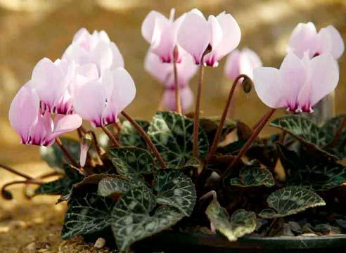 Удобрения для цветов: самые эффективные способы 53
