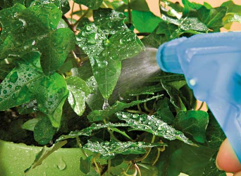 удобрения для внекорневых подкормок комнатных растений
