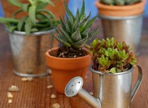полив комнатных растений настоем из банановой кожуры