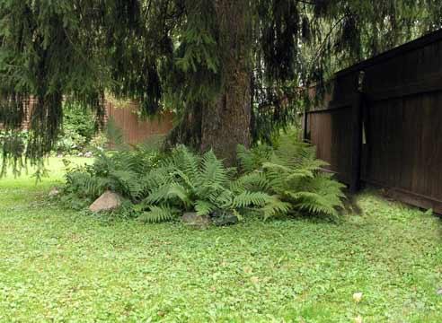 Что можно сажать под деревьями в тени 22