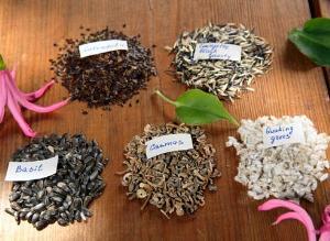 Выбор семян