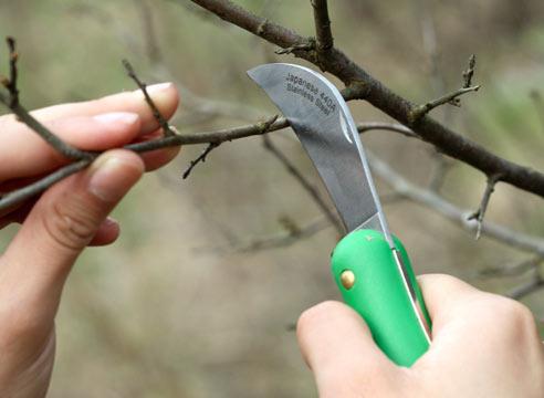 Как произвести обрезку деревьев начинающим на даче