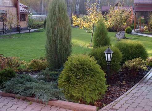 Садовая композиция с хвойными