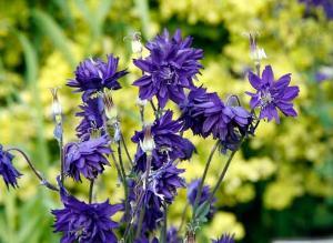 Какие растения и цветы для альпийской горки альпинария