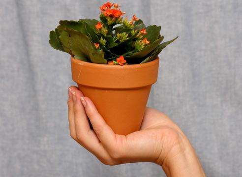 купить систему для полива комнатных растений