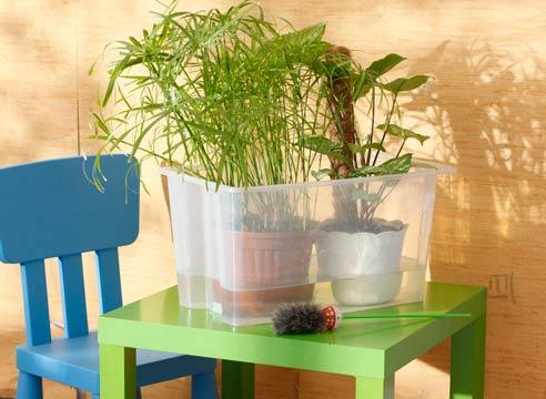 Полив кімнатних рослин під час відпустки – прості рішення