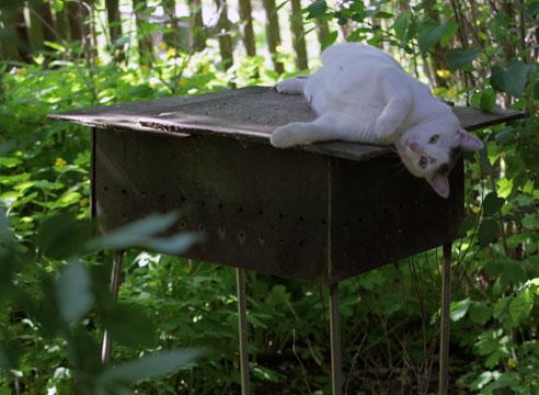 кошка на мангале