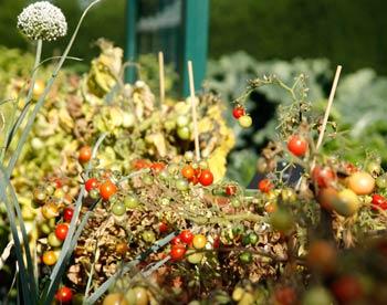 болезнь винограда вызванная трутовыми грибами: