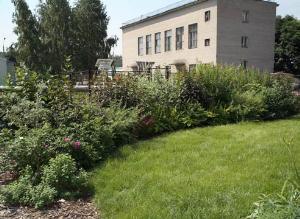 Живая изгородь: не только украсить, но и оградить