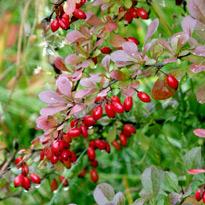 Какие удобрения вносить под плодовые деревья и кустарники 20