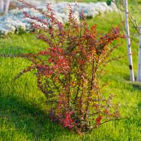 Какие удобрения вносить под плодовые деревья и кустарники 41