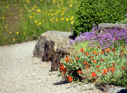 Какие цветы растут на песчаной почве