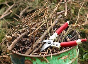 Обрезаем деревья и кустарники: зачем и по каким правилам