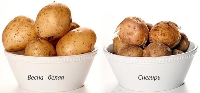 этикетка на картофель образец - фото 11