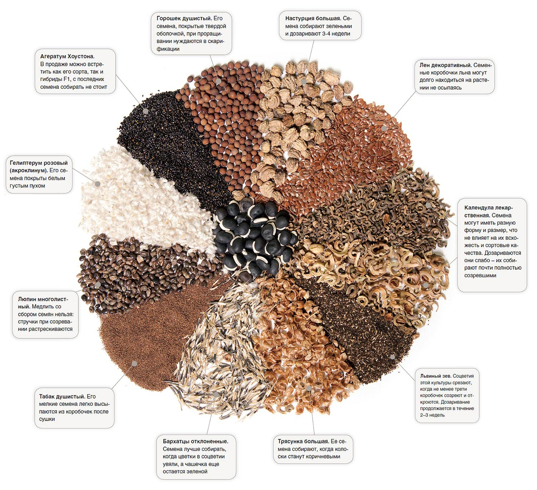 Збираємо та заготовляємо свої насіння: які, де, коли і як