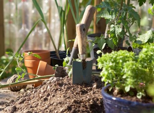Земля для растений своими руками