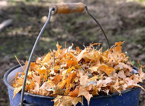Výsledek obrázku pro листва как удобрение