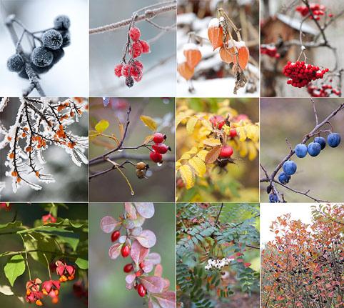 Сад, красивый круглый год: мифы и реальность