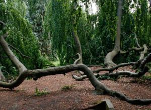 Горячая девятка: 9 самых необычных деревьев и кустарников