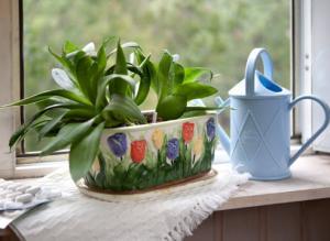 Растения для детской комнаты: что можно и что нельзя