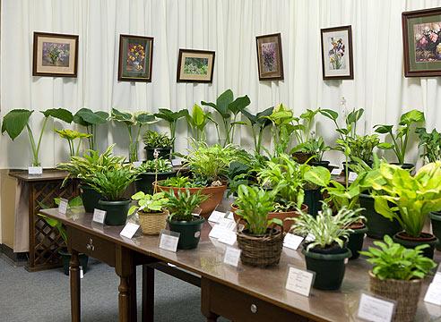 Выставки Расписание выставок  Сайт о растениях