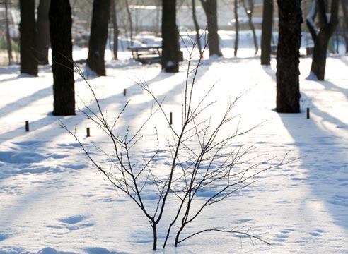 Зима, кустарник