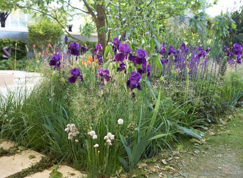 Цветы петушки фото посадка и уход