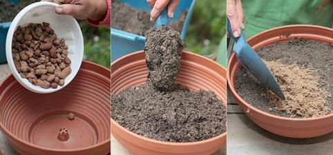 садовый жасмин, размножение черенками, подготовка грунта