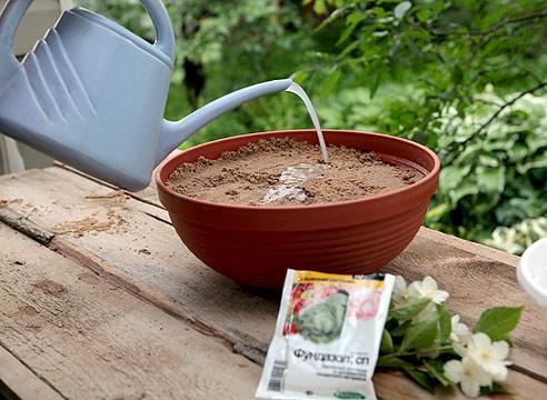 садовый жасмин, размножение черенками, обработка грунта фунгицидом
