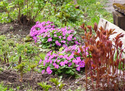Сажать в тени цветы 226
