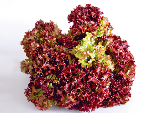 Все разнообразие листовых салатов: учимся разбираться в салате