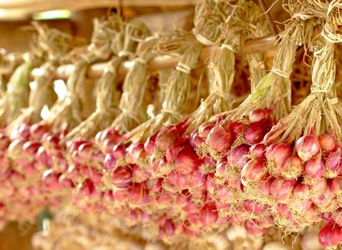 Як зберегти урожай часнику та цибулі: кращі народні засоби, перевірені часом