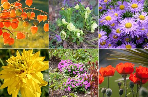 Какие цветы можно сеять под зиму и когда