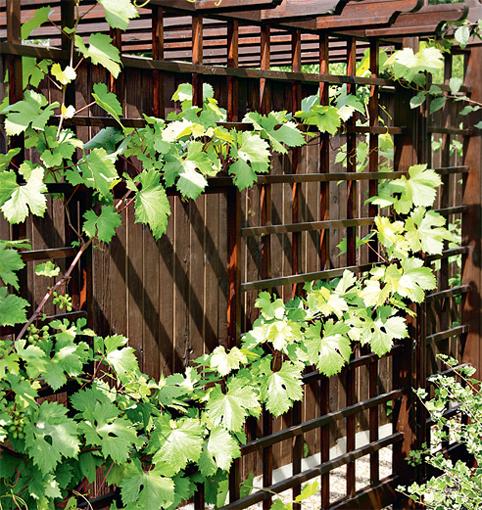 Для винограда забор своими руками