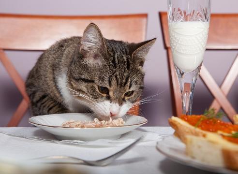 Когда кота кормить специальным