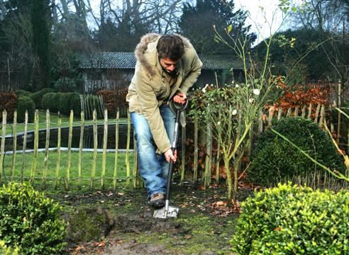 Что и как сажать в саду 895