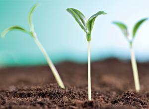 Как вырастить рассаду: проблемы и решения