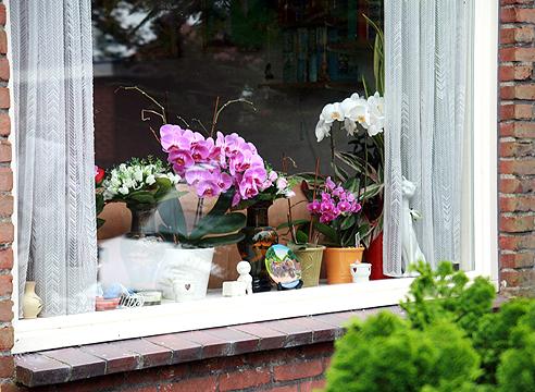 Какие комнатные цветы можно выращивать на южных окнах?