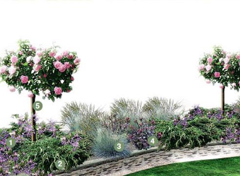 Эскиз композиции со штамбовыми розами