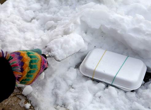 стратификация семян примулы в снегу