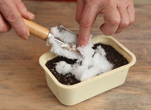 Примулы из семян. Раскладываем снег.