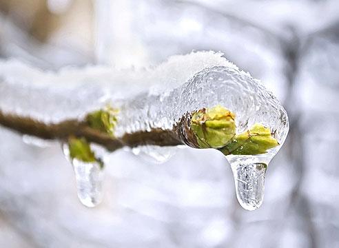 заморозки, ледяной дождь