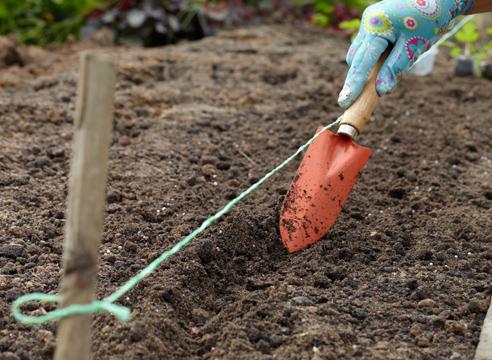выращивание рассады земляники из семян в торфяных таблетках, подготовка посадочных мест