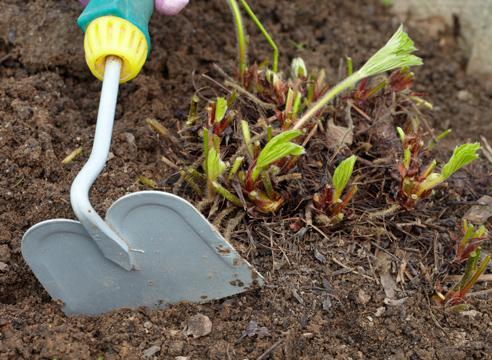 После клубники обработка почвы